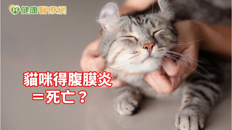 貓咪得腹膜炎=死亡? 中研院解鎖冠狀病毒_Thermage FLX,鳳凰電波